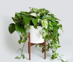 6 Air Purifying Plants That Will Clean The Air And Boost Your Mood - House Plants Big Indoor Plants, Hanging Plants, Indoor Ivy, Indoor Gardening, Ivy Plants, Cool Plants, Shade Plants, Plante Pothos, Low Maintenance Indoor Plants