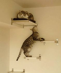 Cat Tree Design Ideas, Simple DIY Cat Furniture