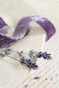 Lavender and Lilac Lavender Cottage, French Lavender, Lavender Fields, Lavender Color, Lavender Flowers, Color Violeta, Yennefer Of Vengerberg, Malva, Arte Floral