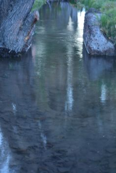 El agua ingresando en las hileras gracias al trabajo del hombre.