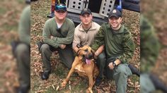 Rhea Sheriff's Bloodhound saves 78-year-old veteran in Sequatchie – Reported missing on Wednesday, 78-year-old Norman Hobbs had wandered off into the thick Sequatchie County woods near his Dunlap home. The missing veteran suffered from Alzheimer's Disease and become lost in the cold thickets. WRCBtv.com | Chattanooga News, Weather & Sports Aware of past successes of Rhea County Sheriff Department's tracking team, Dunlap Police reached out for help. Lead tracker, Cpl. Wayne Cox of the...