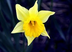 The yellow beauty. Nature Photos, Joy, Eyes, Yellow, Flowers, Plants, Beauty, Glee, Florals