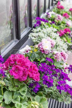 Window Flower Box Stock Photos Images, Royalty Free Window Flower ...