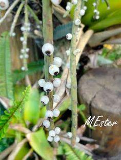 * CACTOS E SUCULENTAS (Cacti and succulents) - Viagens com flores, ervas e frutos