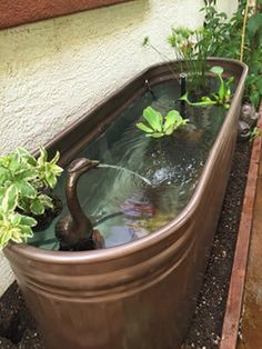A pond is often as large as you desire, but I decided to make mine approximately 48 feet. Hence, ponds frequently have a great number of different animal specie...