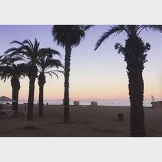 """""""Tonight we run wild(..)An sich war auch das Camp echt toll, man hatte mehrere Supermärkte zentral oder in direkter Nähe und es gab rund um die Uhr etwas zu essen. Am besten haben mir die LateNightSnacks geschmeckt, da gabs zum Beispiel Brownies, Sandwiches oder Bruscetta"""" #Malgrat #rufreisen #spanien #runwild #friends #holiday #palmen #sunset"""