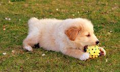 Photos d'animaux de compagnie chiens, chats et rongeurs - Wamiz