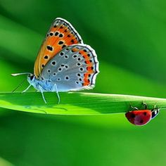 My love of both butterflys and lady bugs