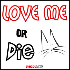 Love Me Or Die   #cats #gatos #gatetes #catslovers #catlover #love #amor #meow #miau #love #amor