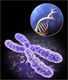 8 Ways to Maximize Telomere Length and Increase Life Expectancy