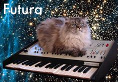 Community Post: 20 Cats As Fonts