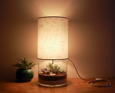 Bohemian Homes: Stylish round terrarium with a lamp on top. Pretty and practical!