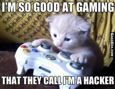Pussy Gamer - #cats, #pets, #animals, #funny, #lol, #humor, #jokes, #lolpics, #funnypics,