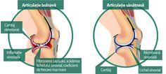 Modificarile fiziologice majore observate in cursul imbatranirii - SANTE TOUR