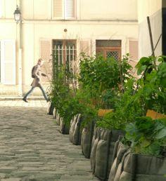 The City, a garden to conquer!