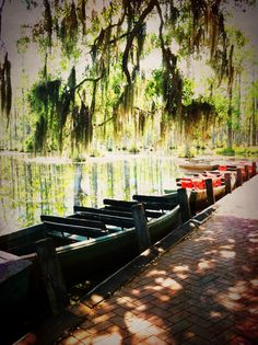 1000 Images About South Carolina On Pinterest South Carolina Clemson And Palmetto Moon