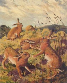 View March hares by Charles Frederick Tunnicliffe on artnet. Browse upcoming and past auction lots by Charles Frederick Tunnicliffe. Ladybird Books, March Hare, British Wildlife, Bunny Art, Royal College Of Art, Classical Art, London Art, Paintings I Love, Typography Prints