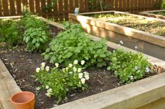 How to build raised garden beds.  I like these because they're taller...easier to care for