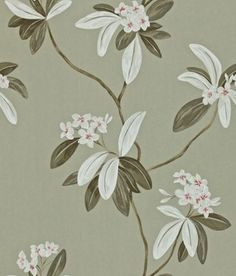 Oleander (212132) - Sanderson Wallpapers - Oleander is a contemporary design of trailing oleander stems in a beautiful painted effect. Shown here in pewter/silver - more colours are available. Please request a sample for true colour match. Paste-the-wall product.
