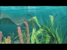 You Tube: The Cambrian Explosion