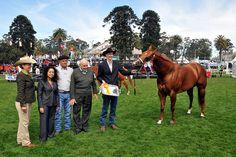 U.S. Horses at ExpoPrado 2013 | Flickr - Photo Sharing!