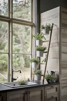 Если нет возможности завести огород, можно с легкостью вырастить пряные травы у себя на подоконнике. ...