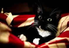 Image result for kitten pictures 1152 pixels tall and 2048 pixels wide