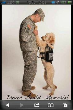 PTSD-Service Dogs Do Help!!! AMEN!! My Goldendoodle S.D, Jack, helps with MY Mental Health issues, including PTSD, Major Depressive Disorder, Social Anxiety, etc. Also my FMS, for balance and retrieving dropped items. I can't imagine him NOT being in my life!