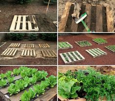 bahçede sebze yetiştirmek - Google'da Ara Farm, Vegetable Garden, Outdoor, Plants, Landscape, Outdoor Decor, Green, Stepping Stones, Garden