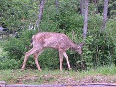 Homemade Deer Repellant Recipes | Garden Guides