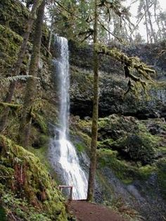 Trail of 10 Falls, Oregon... 10 waterfalls, one hike? Awesome.