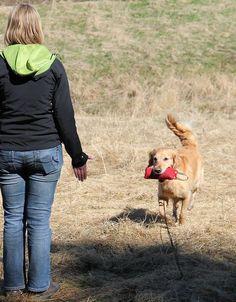 Potty Train a Dog in 3 Days #dogtraining Police Dog Training, Service Dog Training, Dog Training School, Agility Training For Dogs, Best Dog Training, Dog Agility, Leash Training, Crate Training, Petsmart Dog Training