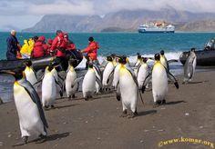 Сокровища Антарктического полуострова Вы посетите полярные станции, прогуляетесь по Антарктическому полуострову и будете наслаждаться потрясающими видами. Цена по акции до 31.08  http://moy-expert.ru/to/1338049/t76502