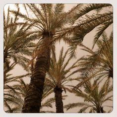 .-. palmtrees