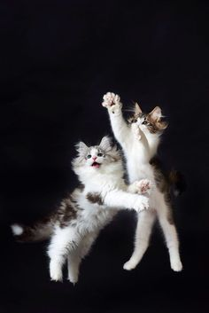 Cats by Ryuichi Miyazaki on 500px