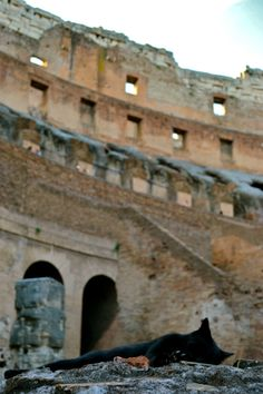 Colosseum - Rome ~ (There are estimated to be 300,000 feral cats in Rome living in over 2000 colonies.)