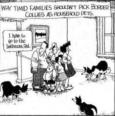 Le famiglie timide non dovrebbero avere border collie come animali domestici... :)))