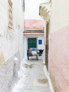 morocco / alexandre