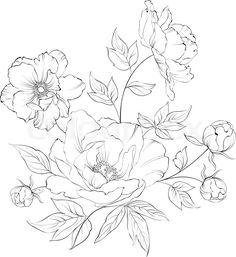 Find Bush Beautiful Peonies Ink Engraving Vector stock images in HD and millions of other royalty-free stock photos, illustrations and vectors in the Shutterstock collection. Thousands of new, high-quality pictures added every day. Peony Drawing, Floral Drawing, Art Floral, Flower Graphic, Flower Sketches, Flower Drawings, Drawing Flowers, Peonies Tattoo, Desenho Tattoo