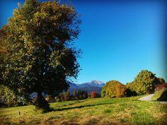 fantastiche giornate autunnali!  #valdinona4zampe #montagna #falchettolovers #nordicwalking #passeggiare #valdinon #nelbludipintodiblu #trentinodavivere #sun