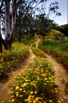 Is this a path in Ojai CA?  by ojaipatrick