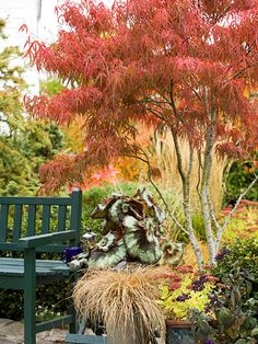 Japanese Maple        Few plants are more beautiful than a Japanese maple in its full fall finery. And happily, there are numerous ways to use this little tree in your yard -- try it as a specimen in a partly shaded spot, for example, or use it as a focal point in a mixed border.        Name: Acer palmatum selections        Size: From 6 to 25 feet tall and wide        Zones: 6-8        Standout Varieties: 'Bloodgood' is a common selection with fine-texture burgundy foliage that turns red in…