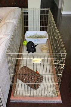 This is the set up I am going for if/when I get my holland lop bunny. Already have the XPen, litter box, and water dish. Behind the couch will be the perfect spot.