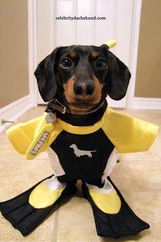 Cutest Scuba Dog Costume