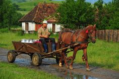 Milk wagon, Romania, Transylvania Horse Wagon, Horse Drawn Wagon, Country Life, Country Living, Farm Paintings, Fiddler On The Roof, Horse And Buggy, People Of The World, World Cultures