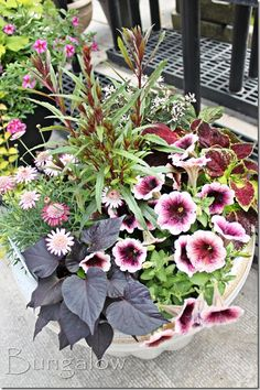plant combinations, i've seen these plants everywhere in the nurseries and i'm sure you have too! :) swee potato vine, petunias, coleus