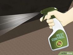 3 Ways to Get Rid of Carpet Beetles - wikiHow How To Get Rid, Pest Control, Beetles, Shed, Carpet, Oven Cleaning, Easy, House, Home