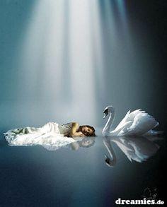 dreamies.de (ibsaj02x97y.jpg)
