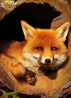 You're safe for now. Foxy. :)