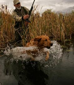 Popular Types of Hunting - HuntingTopic Bow Hunting Deer, Duck Hunting, Hunting Dogs, Hunting Stuff, Waterfowl Hunting, Vizsla, Mans Best Friend, Dog Life, The Great Outdoors